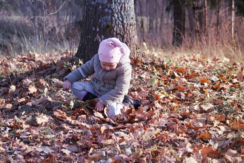 Pequeña muchacha feliz en el parque del otoño que juega con las hojas de arce caidas imágenes de archivo libres de regalías