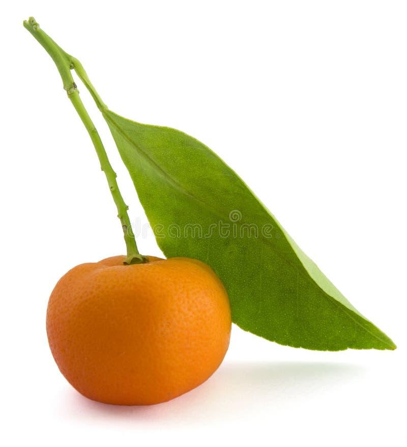 Pequeña naranja imagen de archivo libre de regalías