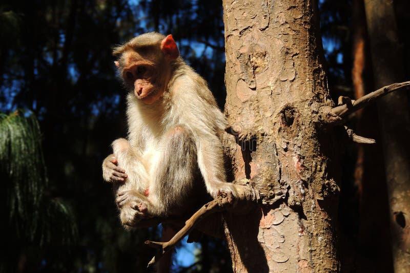 Pequeña observación del mono fotografía de archivo libre de regalías
