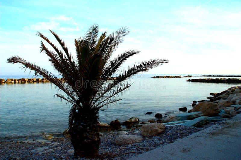 Pequeña palmera en una playa rocosa cerca del mar adriático imagen de archivo