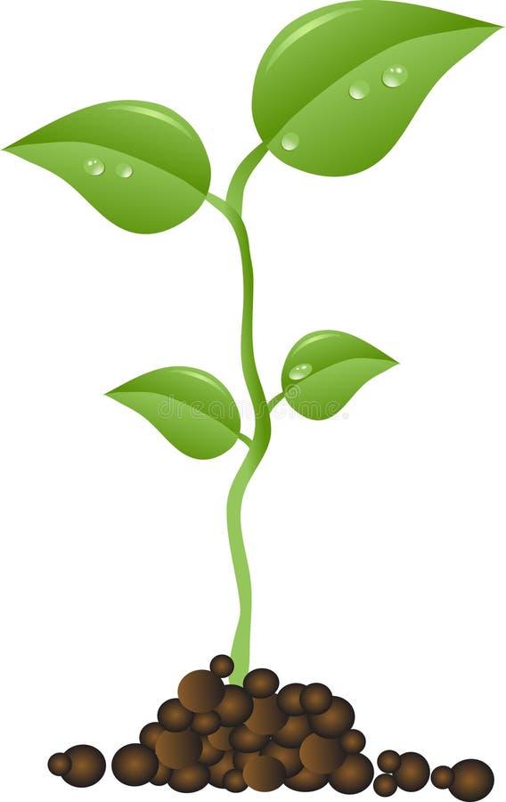 Pequeña planta ilustración del vector