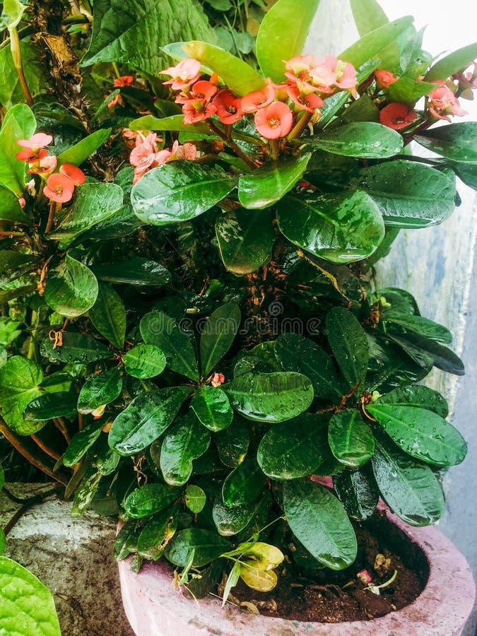 Pequeña planta con las gotitas de agua imagenes de archivo