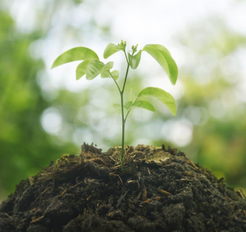 Pequeña planta en la pila de suelo sobre el ambiente verde, nueva estafa de la vida imagen de archivo
