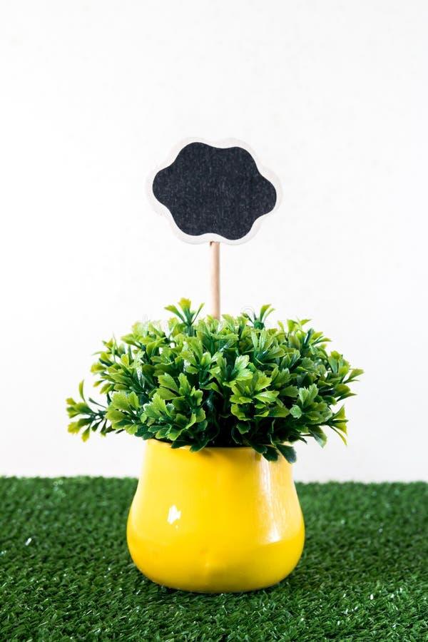 Pequeña planta en un pote amarillo con la placa de la etiqueta fotos de archivo libres de regalías
