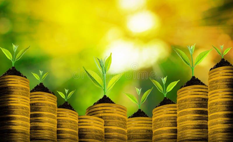 Pequeña planta fresca sobre muchas monedas con el extracto borroso foto de archivo libre de regalías