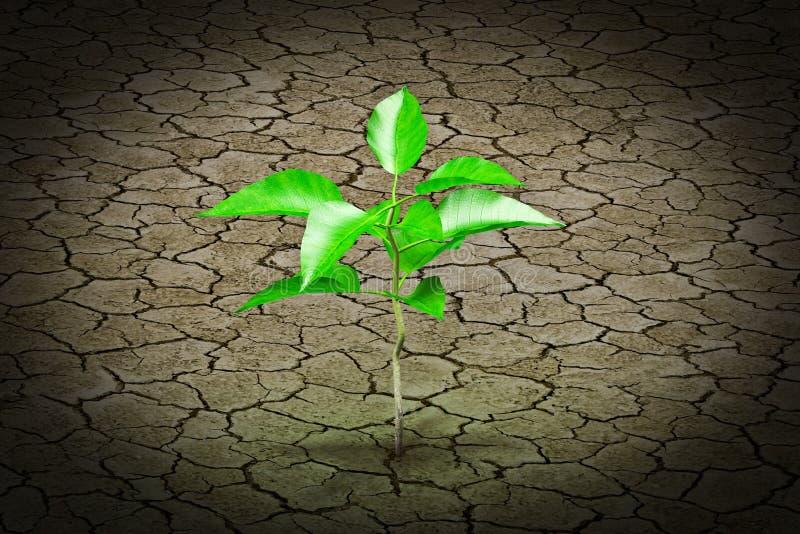 Pequeña planta que crece de la tierra agrietada fotos de archivo