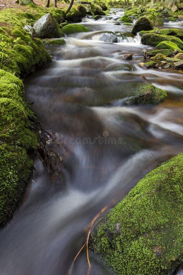 Pequeña primavera en bosque verde foto de archivo