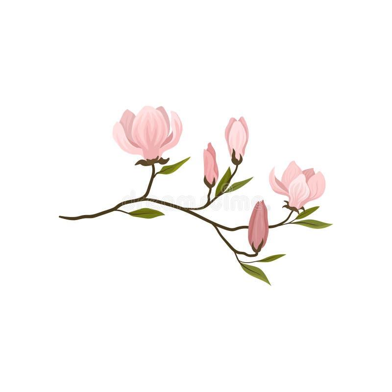 Pequeña ramita con las flores rosadas apacibles Rama floreciente del árbol de la magnolia Tema de la botánica Icono plano detalla stock de ilustración