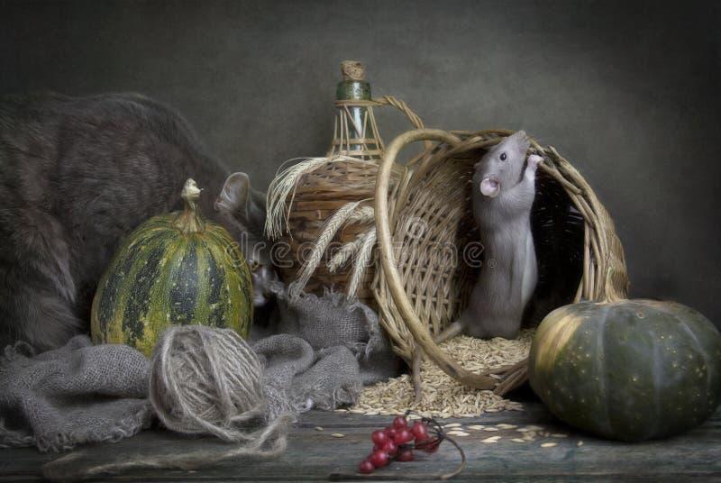 Peque?a rata gris linda, rat?n en una cesta con ma?z y calabazas y gato gris grande Todav?a vida en estilo del vintage con una ra imagen de archivo libre de regalías