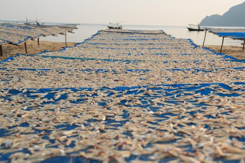 Pequeña sequedad de los pescados fotografía de archivo libre de regalías