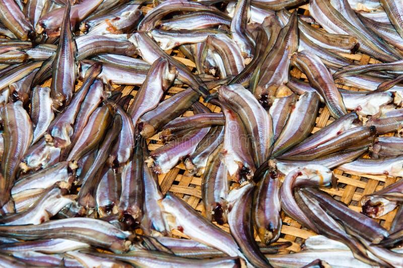 Pequeña sequedad de los pescados en la cesta de bambú en el sol imagen de archivo