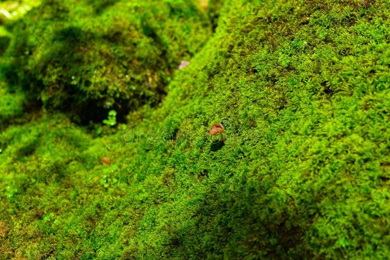 Pequeña seta en el campo del musgo verde imagenes de archivo