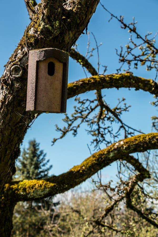 Pequeña tabla del pájaro en un manzano cubierto de musgo viejo imágenes de archivo libres de regalías