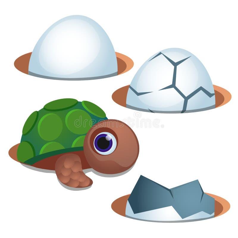 Pequeña tortuga de ojos azules bonita y cáscara de huevo agrietada aisladas en el fondo blanco Ejemplo del primer de la historiet libre illustration