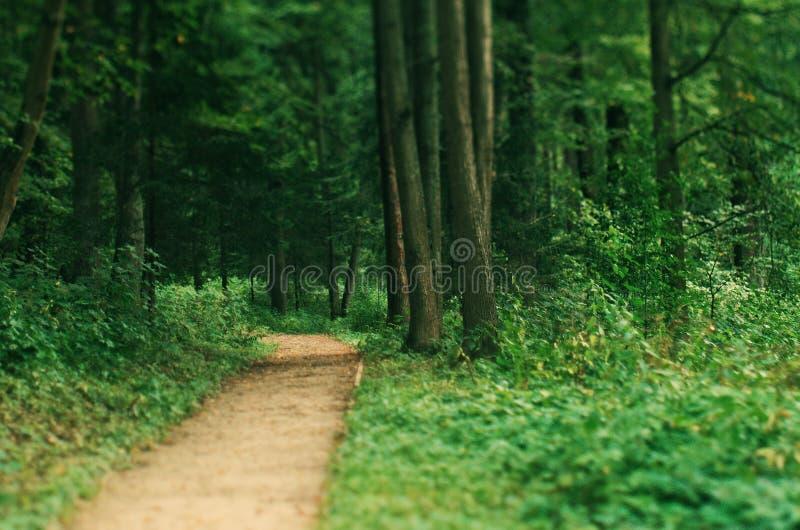 Pequeña trayectoria en un parque fotografía de archivo