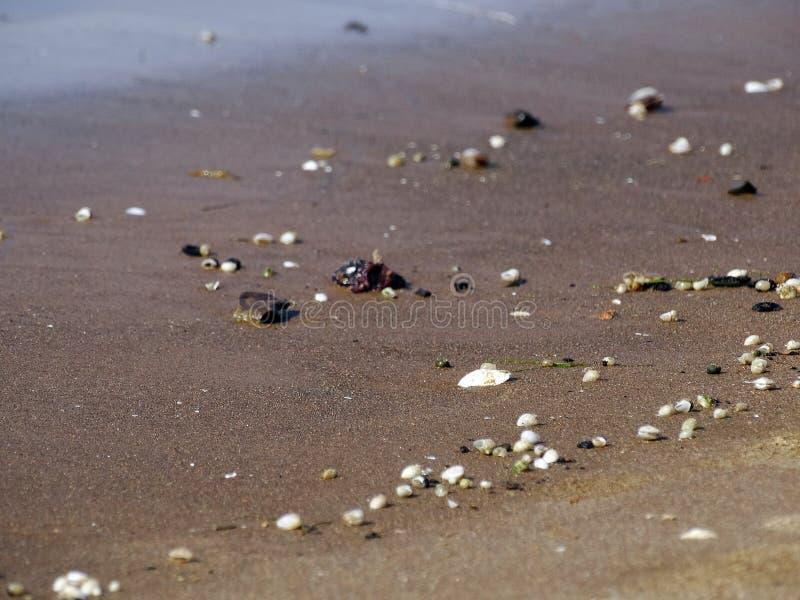 Pequeñas cáscaras en una playa arenosa fotos de archivo