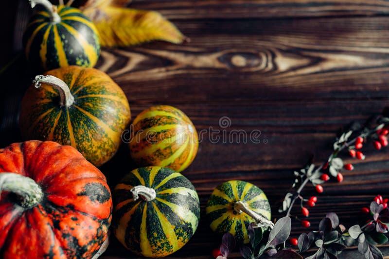 Pequeñas calabazas con las hojas de otoño imagen de archivo