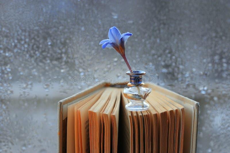 Pequeñas flores azules en el libro fotografía de archivo