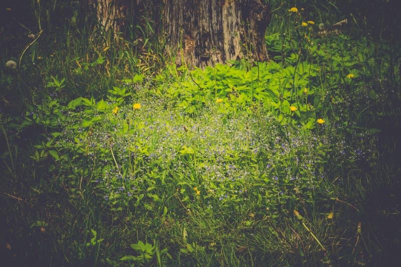 Pequeñas flores azules en la hierba imagenes de archivo