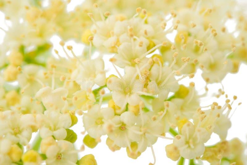 Pequeñas flores blancas imagenes de archivo