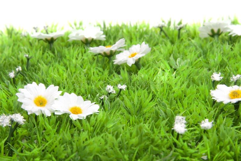 Pequeñas flores blancas de la margarita en hierba fotos de archivo