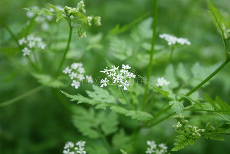 Pequeñas flores blancas en fondo verde foto de archivo