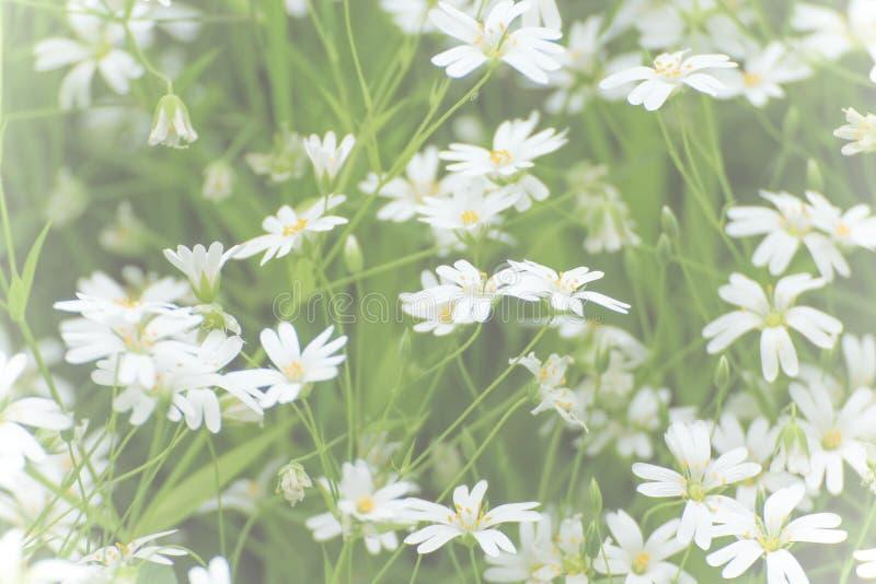 Pequeñas flores blancas en velo imagen de archivo libre de regalías