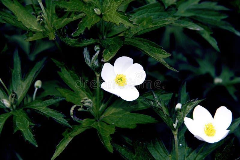 Pequeñas flores blancas hermosas en la cama de flor foto de archivo libre de regalías