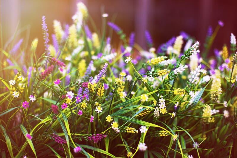Pequeñas flores decorativas multicoloras en un pote debajo del sol imágenes de archivo libres de regalías