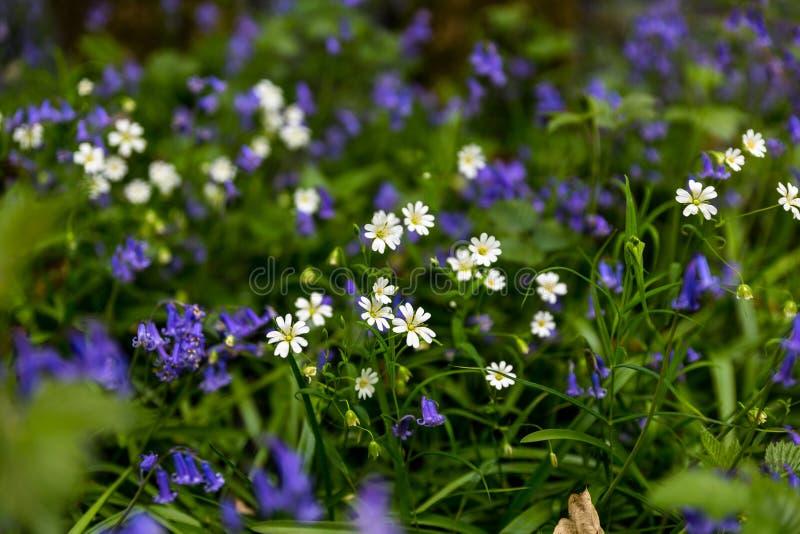 pequeñas flores del bosque imagen de archivo libre de regalías