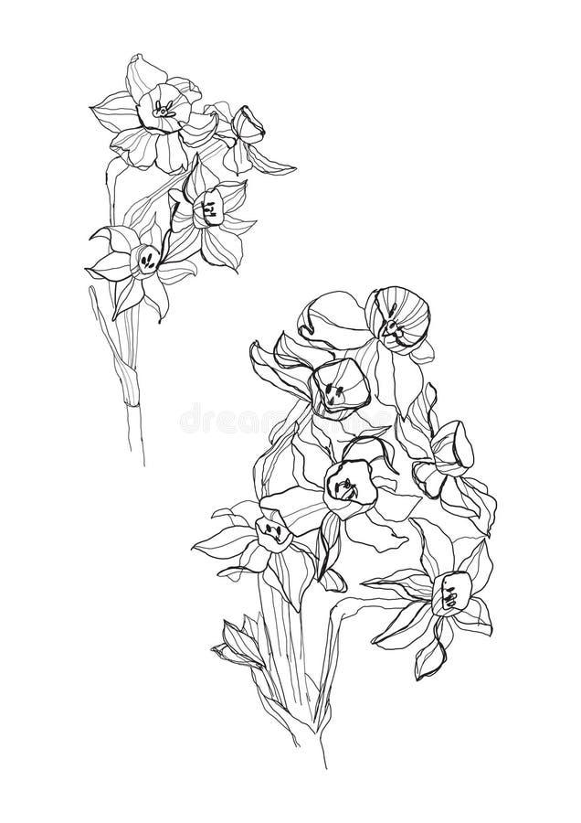 Pequeñas flores del iris ilustración del vector
