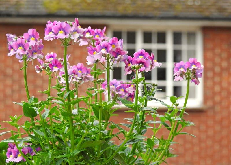Pequeñas flores del jardín del país del tejado fotos de archivo