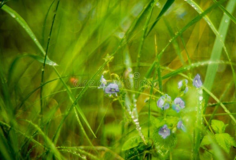 Pequeñas flores del prado salvaje foto de archivo libre de regalías