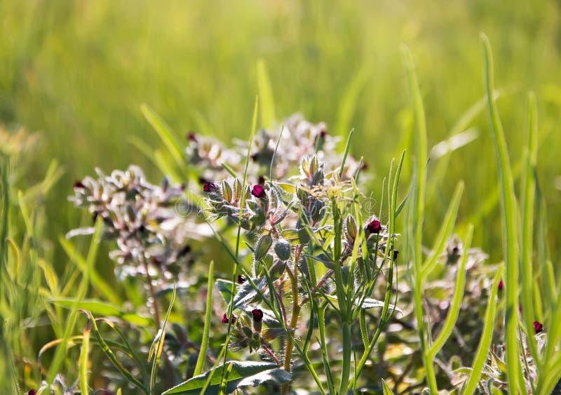 Pequeñas flores florecientes, en un prado verde imagenes de archivo