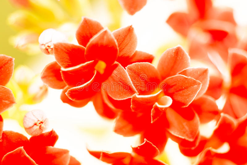 pequeñas flores rojas, naturaleza imagenes de archivo