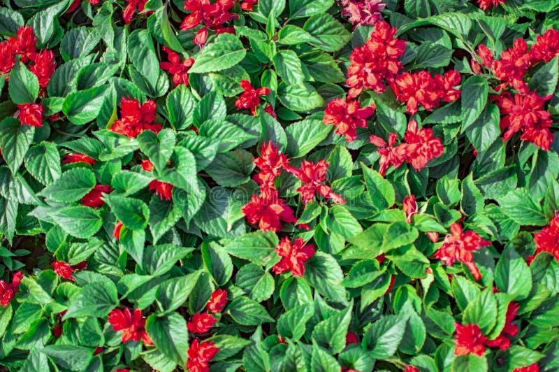 Pequeñas flores rojas y pequeñas hojas verdes imágenes de archivo libres de regalías