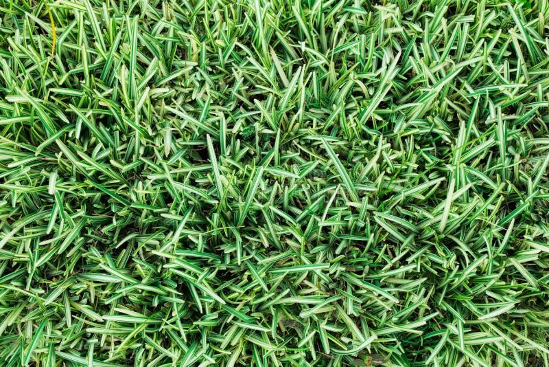 Pequeñas hojas verdes de la hierba en el campo de tierra para el fondo y texturizado fotografía de archivo