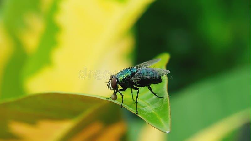 Pequeñas moscas verdes imagen de archivo libre de regalías