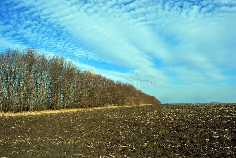 Pequeñas nubes mullidas en un cielo azul de la primavera sobre una línea arada de la humus del campo y del plantación de árboles imágenes de archivo libres de regalías