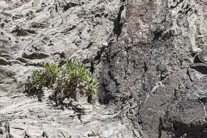 Pequeñas plantas que nacieron en grietas de la roca imagenes de archivo