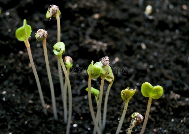 Pequeñas plantas verdes imagen de archivo libre de regalías