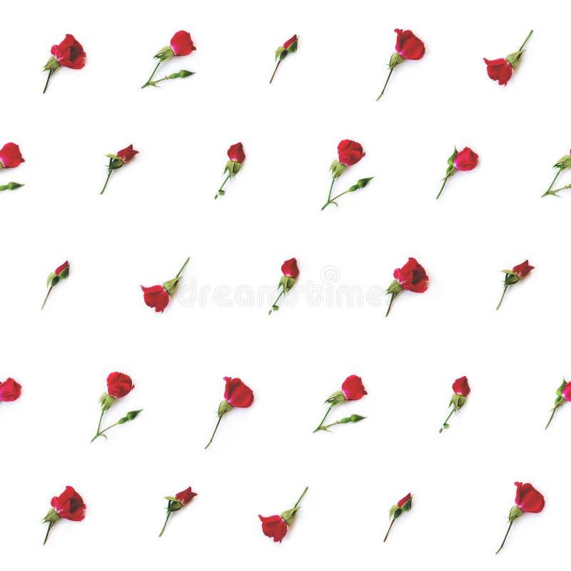 Pequeñas rosas rojas en el fondo blanco fotografía de archivo