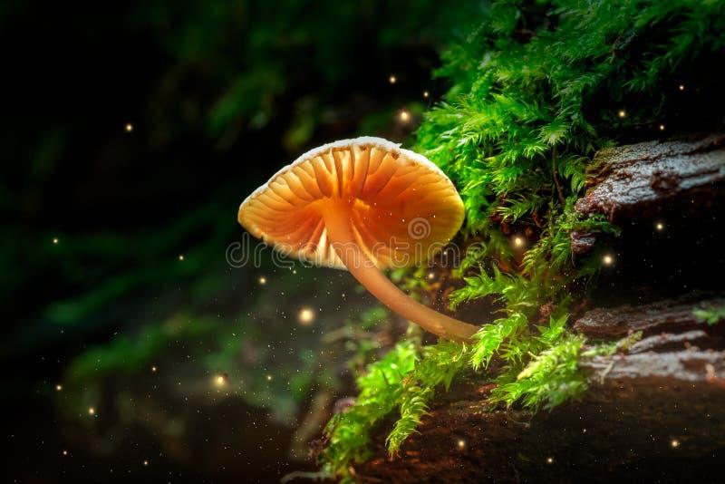 Pequeñas seta y luciérnagas que brillan intensamente en bosque mágico imagenes de archivo