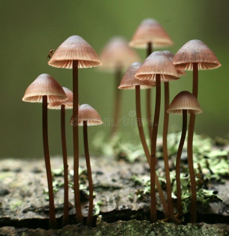 Pequeñas setas de las setas en el bosque imágenes de archivo libres de regalías