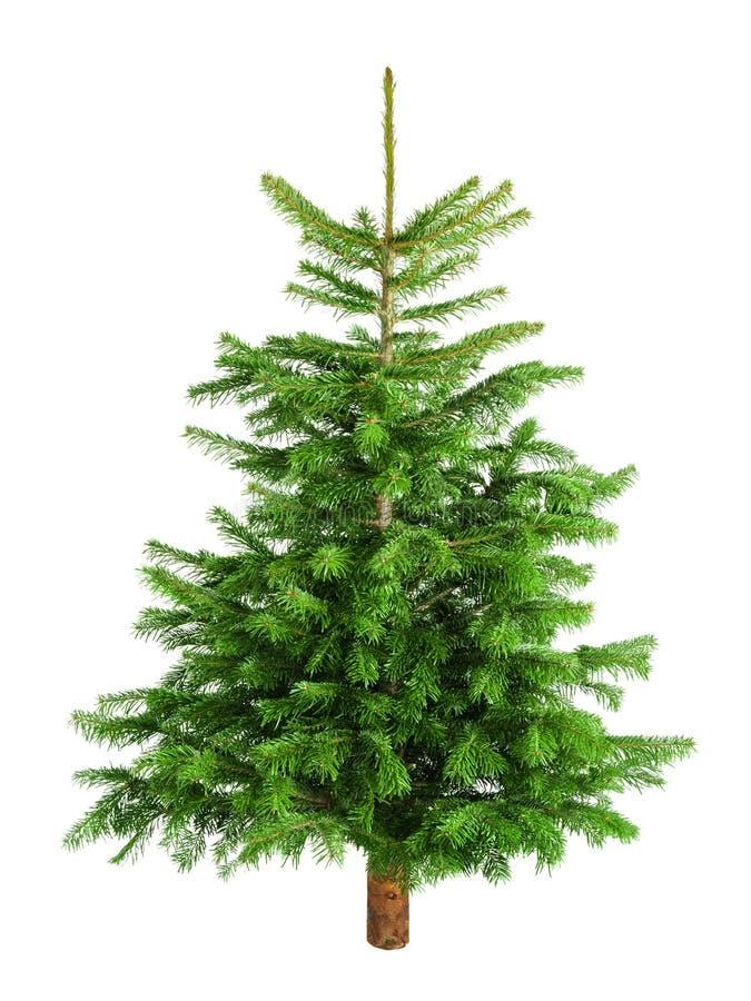 Pequeño árbol de navidad natural sin los ornamentos fotos de archivo libres de regalías