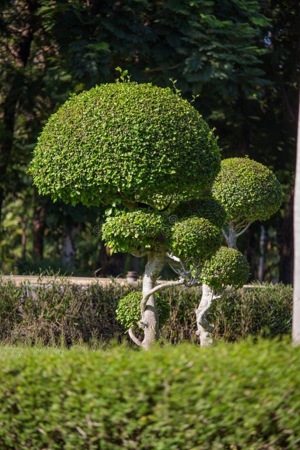 Pequeño árbol en el jardín fotos de archivo