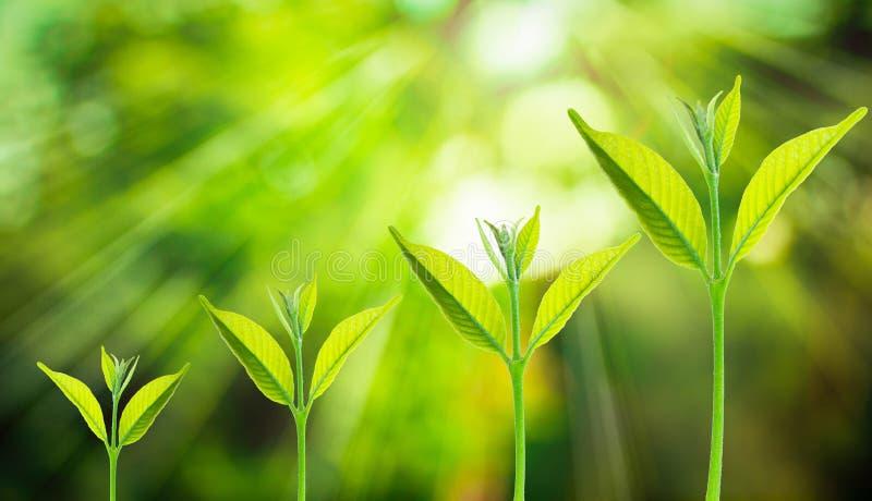 Pequeño árbol que crece en el fondo verde fresco borroso de la naturaleza foto de archivo
