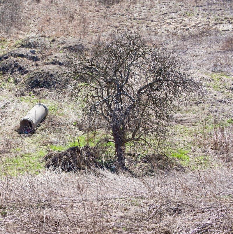 Pequeño árbol y una columna, Jelenia Gora, Polonia fotos de archivo libres de regalías