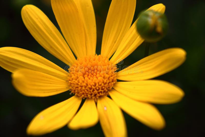 Pequeño amarillo flower2 imagen de archivo