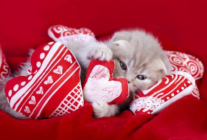 Pequeño amor del gatito imagen de archivo